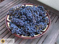 Ogrodnicza Obsesja: Polewa do lodów, czyli winobranie inaczej.