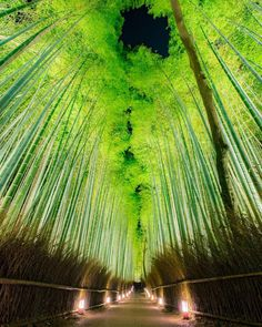 Sagano Bamboo ForestJapanSagano Bamboo Forest is a path surrounded by a bamboo grove that extends along the back o. Japon Tokyo, Kyoto Japan, Japan Japan, Okinawa Japan, Beautiful World, Beautiful Places, Beautiful Pictures, Asia Travel, Japan Travel