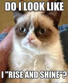 "Grumpy Cat does NOT ""rise and shine"""