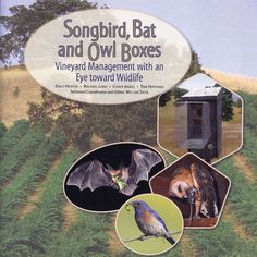 Songbird, Bat and Owl Boxes Natures bug control, yes!!