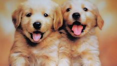 Cute Dogs And Puppies Wallpapers Wallpaper Really Cute Puppies, Cute Dogs And Puppies, Baby Dogs, Doggies, Adorable Puppies, Pet Dogs, Puppy Care, Pet Puppy, Cute Puppy Photos