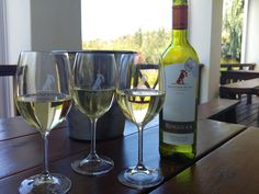 Of course we had the Sauvignon Blanc at Ridgeback Wines, Paarl Sauvignon Blanc, White Wine, Alcoholic Drinks, Glass, Drinkware, Corning Glass, White Wines, Liquor Drinks, Alcoholic Beverages