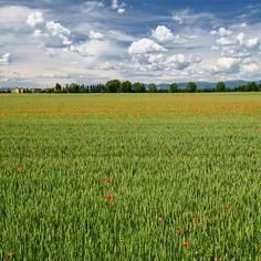 Grugnotorto park, landscape in the springtime by clodio