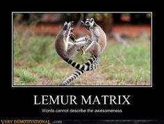 Lemur matrix
