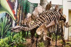 Dinosaurs In Their Time, Carnegie Museum of Natural History. Image Credit: Frank Kovalchek.