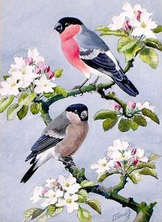 Charles Tunnicliffe The Effective Pictures We Offer You About Birds Drawing crow A quality picture c Pretty Birds, Beautiful Birds, Beautiful Pictures, Watercolor Bird, Watercolor Paintings, Bird Artwork, Bird Drawings, Drawing Birds, Bird Pictures