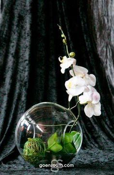 green, white, silver, orchids
