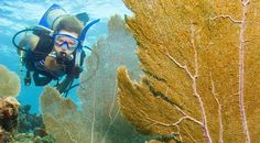 Newsela | South Florida's coral reefs rebounding