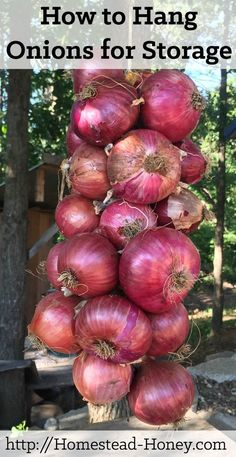 Hang Onions for Storage - Homestead Honey Ready to hang this year's onion crop? This video tutorial will teach you the quickest, easiest way to hang onions for storage! Onion Storage, Food Storage, Produce Storage, Storage Ideas, Permaculture, Container Gardening, Gardening Tips, Organic Gardening, Vegetable Gardening