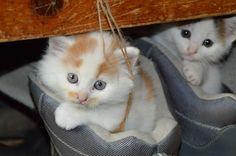 Ho un gattino nella scarpa, ahi!