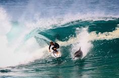 Pro Surfer Soli Bailey Shares Wave With Dolphin And It's Whoa