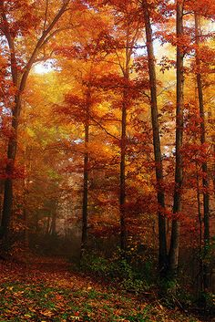 Foggy Path With Fall Foliage | Flickr - Photo Sharing!