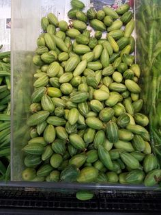 Parval-Pointed Gourd