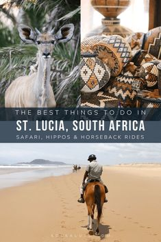 travel idea africa travel idea africa Things to do in St Lucia South Africa South Africa Safari, Visit South Africa, Morocco Travel, Africa Travel, Africa Destinations, Travel Destinations, Travel Tips, Travel Guides, Adventurous Things To Do