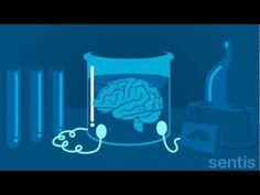 The Sentis Brain Animation Series takes you on a tour of the brain through a series of short and sharp animations. The fourth in the series explains how our .Use the neuroscience: effort & difficulty—that's when you're growing your neurons! Brain Based Learning, Whole Brain Teaching, Teaching Biology, Growth Mindset Videos, Habits Of Mind, Visible Learning, Brain Facts, Conscious Discipline, Mind Up