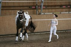 equestrian vaulting <3