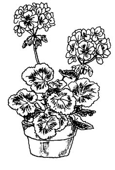 drawings of geraniums | Drawing Clip Art, Misc. / ink geraniums