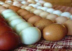 pretty eggs.