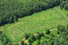 Blenheim Palace Marlborough Maze, aerial view. Woodstock ...