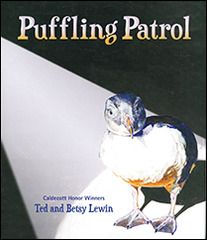 Puffling Patrol - Children by Ted Lewin (author) Betsy Lewin (illustrator) Lee & Low Books (2012) Erna, Dani and their father drive through their Iceland town at night every August looking for baby puffins, called pufflings, that have glided from their nests on the rocky cliffs to the streets instead of the sea. Will they be able to rescue all the pufflings before they encounter danger? Will the baby birds make it to the sea? 56 pp.