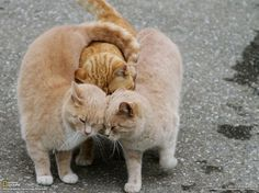 kitty group hug