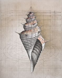 Golden Ratio Coloring Book Highlights The Hidden Mathematical Beauty In Nature
