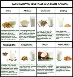 Alternativas vegetales a la leche animal - Vegetable alternatives to animal milk