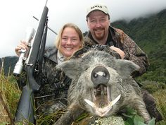 The New Zealand wild pigs known as 'Captain Cookers' are typically black with a long snout and do not reach the impressive size of the NZ Blue Boar. - https://www.facebook.com/RaiValleyHuntingFishing