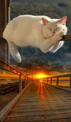 Animals And Pets, Cute Animals, All Nature, Photomontage, My Images, Dog Cat, Scenery, Artist, Artwork