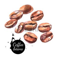 Image result for coffee bean watercolor