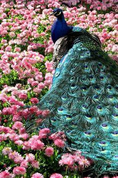 Resultado de imagem para beautiful flowers and birds