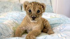 106-bebes-animaux-hyper-craquants-qui-vous-feront-fondre-de-tendresse61