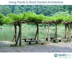 This is a guide about using plants to build garden architecture. Architectural plants, also know as specimen or accent plants, provide structure to your garden.