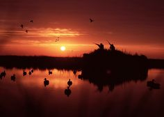 There is nothing that beats a beautiful sunrise from a duck blind. The light shi… - Modern Duck Hunting Tattoos, Hunting Wallpaper, Hunting Photography, What The Duck, Duck Season, Hunting Supplies, Waterfowl Hunting, Duck Blind, Fish Camp