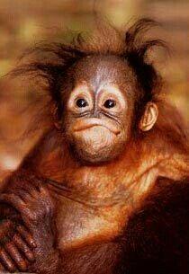 My Dentures Make Me Look Like A Monkey