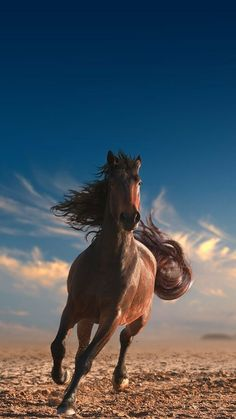 Running like the Wind .....