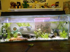 This is a site for advice and information on axolotl care, as well as a place to post pictures of my axolotls. Axolotl Care, Axolotl Pet, Fish Aquarium Decorations, Aquarium Ideas, Diy Aquarium, Turtle Tank Setup, Animals And Pets, Cute Animals, Fish Tank Accessories
