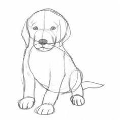Рисунки щенков карандашом