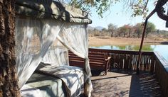 Safari to Jaci's Tree Lodge with Africa Travel Resource North South, Africa Travel, Lodges, Places Ive Been, South Africa, Safari, Outdoor Decor, Home Decor, Cow