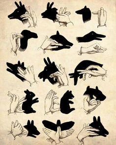 shadow aninals