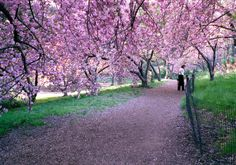 Strike that - places I need to go - Central Park with those trees... I think it's a must, not want.