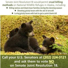 Protect Alaska's native wildlifeAnimals in Alaska's national wildlife refuges will soon be at risk of being hunted in their own homes. After H.J. Resolution 69 passed the U.S. House of Representatives on February 17, the U.S. Senate is now considering legislation that would be bad for wildlife. S.J. Resolution 18 will revoke the U.S. Fish and Wildlife Service (FWS) rule prohibiting controversial and scientifically unjustified killing methods on over 76 million acres of federal lands in Alask