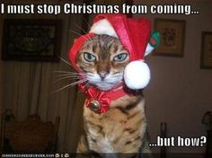 Grinch cat....LOL!!!