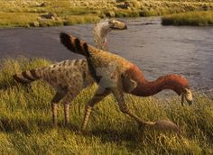 Llallawavis scagliai | Pliocene Argentina |  by Leogon on DeviantArt
