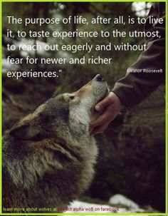 have you pet a wolf lately? SOOOO want a wolf-dog Beautiful Creatures, Animals Beautiful, Animals And Pets, Cute Animals, Wild Animals, Wolf Love, She Wolf, Beautiful Wolves, Mundo Animal