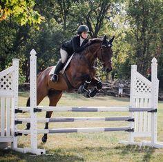 Pinterest ➳ equestrian