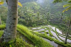 Pin By Little T On I Trees Pinterest - 25 incredible photographs will make want go indonesia