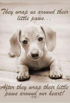 What a beautiful thought! #dog  #quote  #dogquote   http://www.petrashop.com/