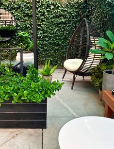I love a secret garden and even some not so secret. This small patio garden was magic waiting to happen. When I got the opportunity to bring some life into this apartment buildings backyard patio I jumped at the chance. Garden Diy On A Budget, Garden Ideas, Backyard Buildings, California Living, Small Patio, Backyard Patio, Hanging Chair, Opportunity, Waiting