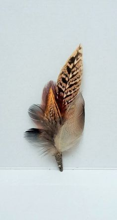 Pheasant feather brooch pin. Antique bronze or silver end. comes boxed